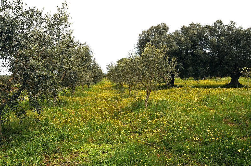 olivenhain - urupia 2015 (15)