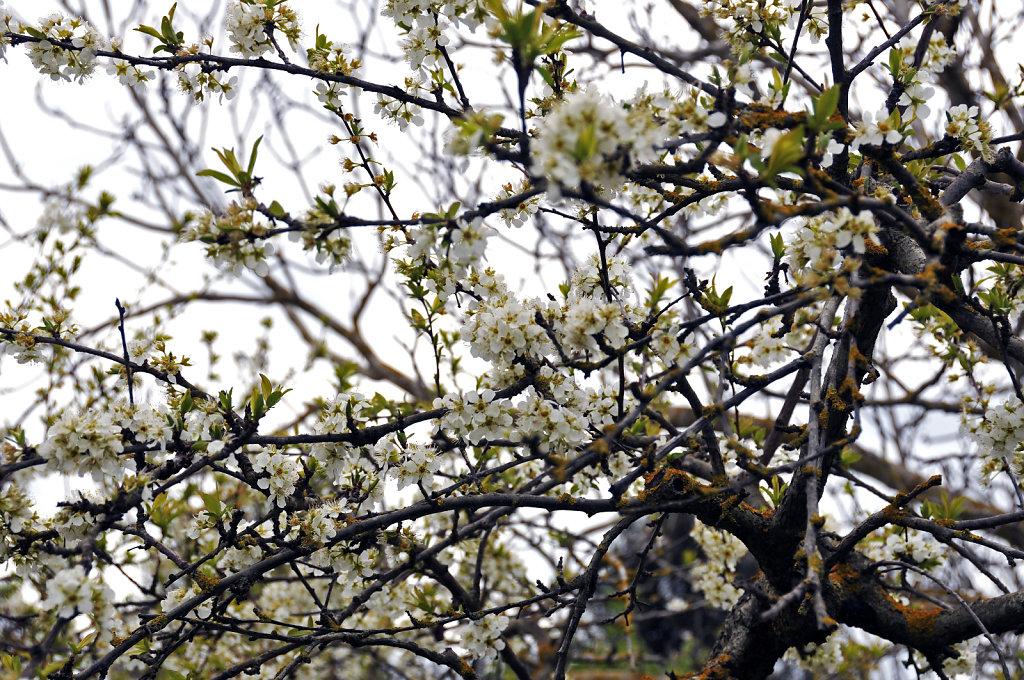 baumblüte - urupia 2015 (28)