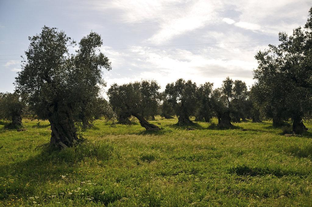olivenhain – teil 2 - urupia 2015 (41)