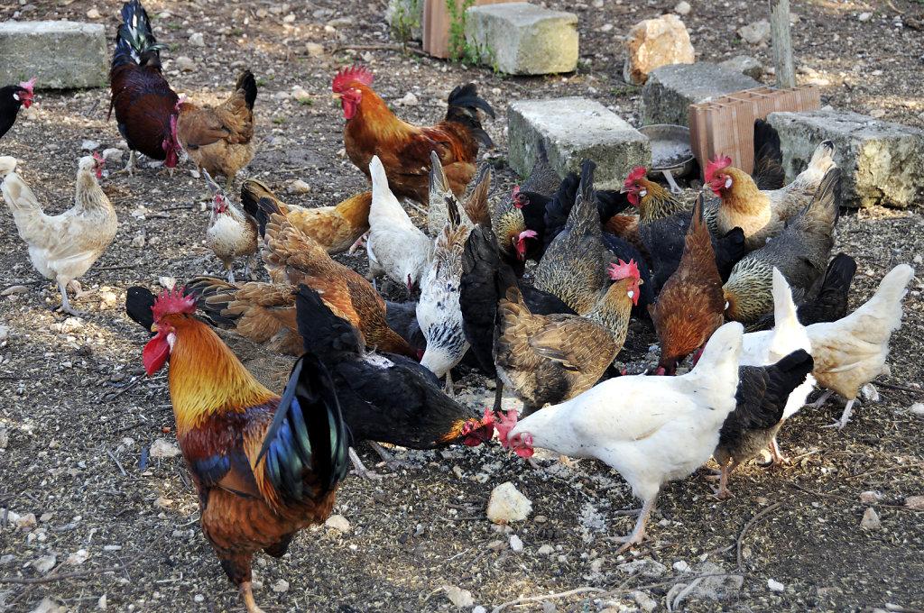 im hühnerstall - urupia 2015 (57)