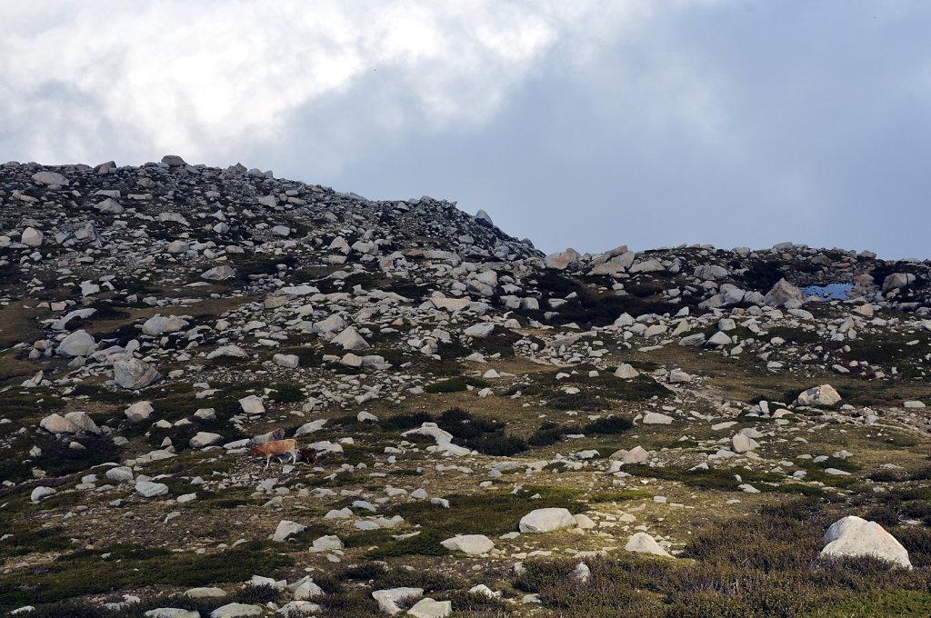 korsika  - aufstieg zum monte renoso und dem bastanisee  – suc