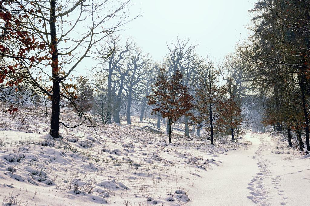 wendland - breeser grund -  bild nr. 04