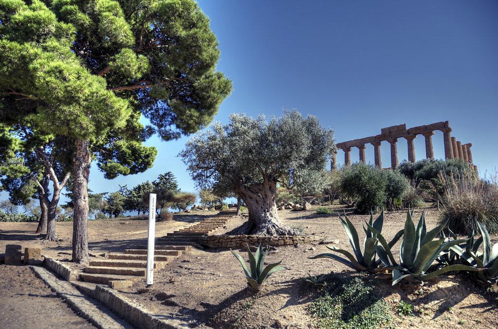 sizilien (08) - tal der tempel - der archäologische park teil 2