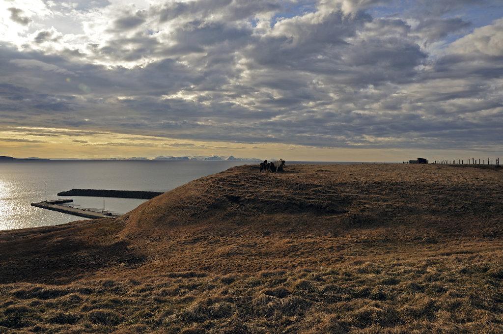 island – zwischen varmahlíð und blönduós (06)