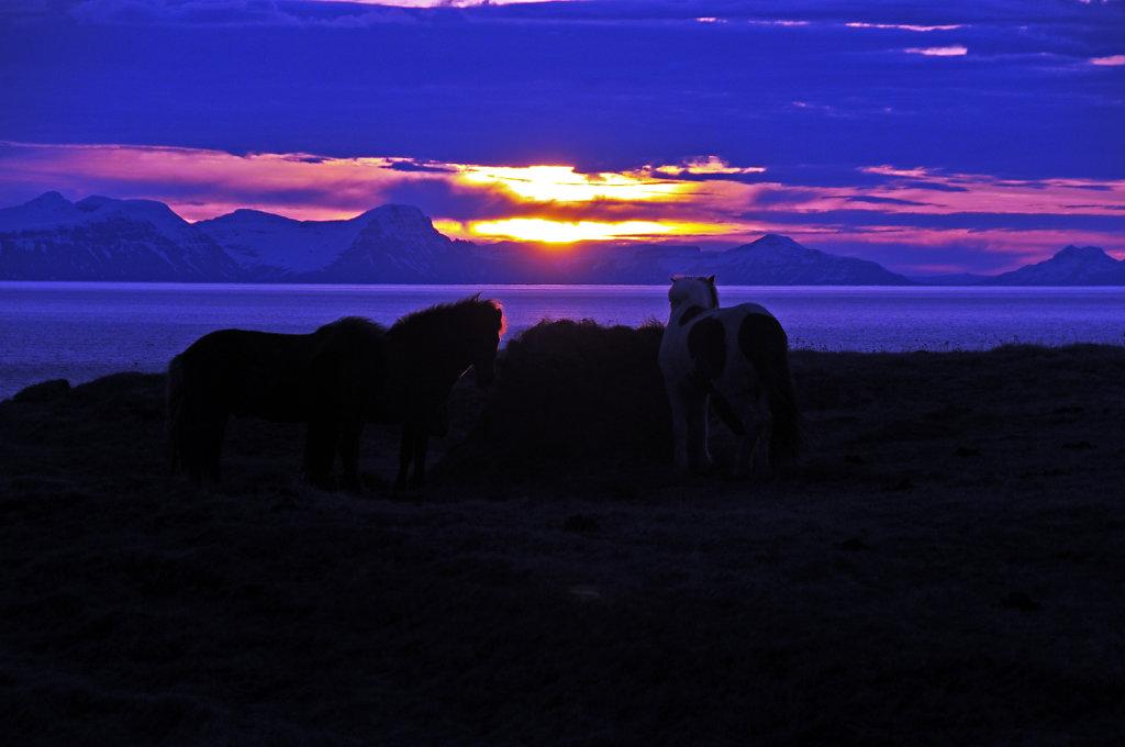 island – zwischen varmahlíð und blönduós (09)