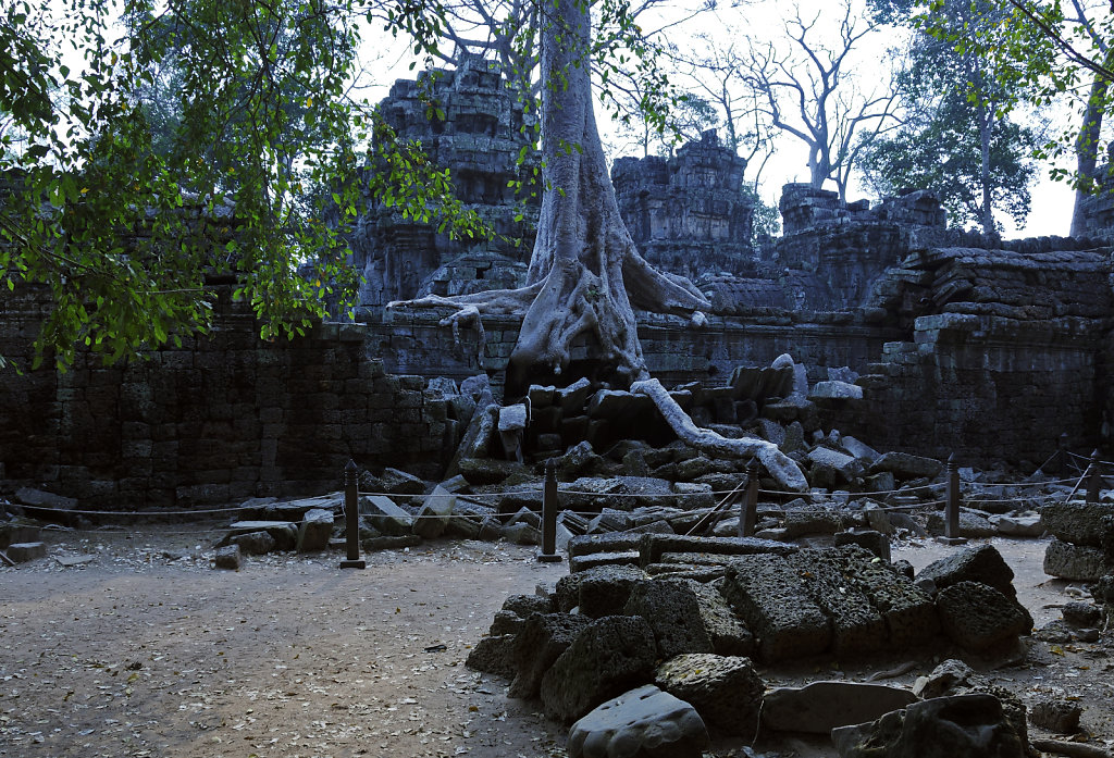 kambodscha - tempel von anghor - ta prohm (23)