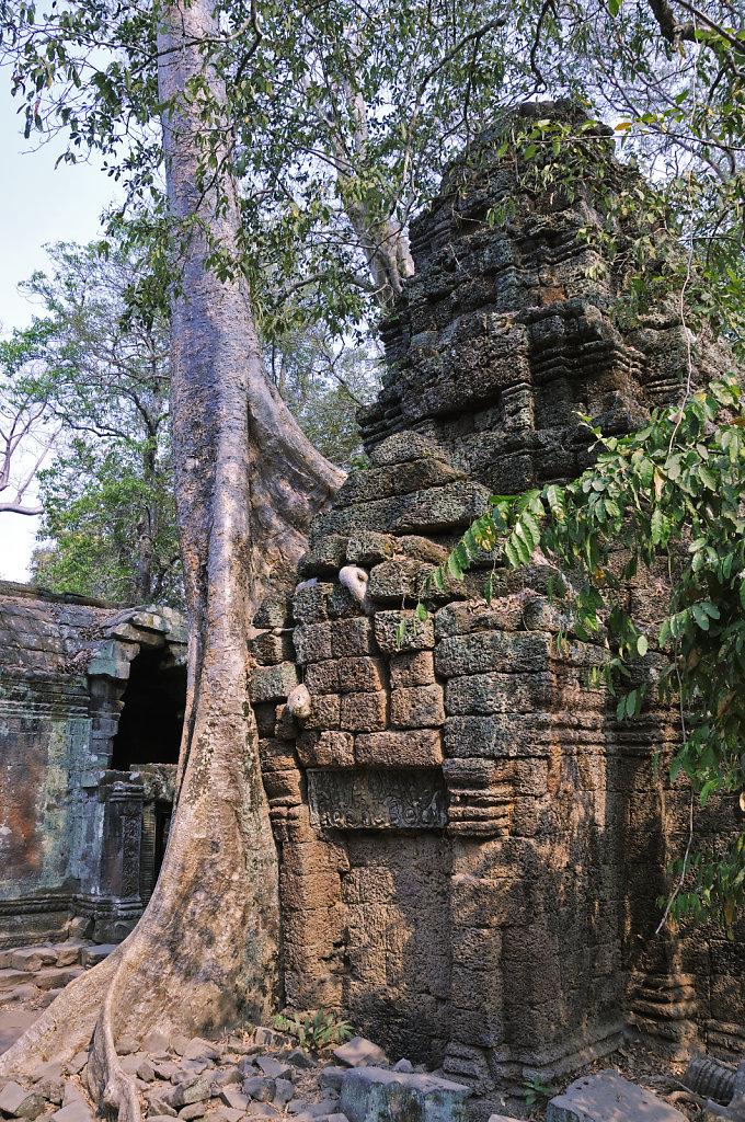 kambodscha - tempel von anghor - ta prohm (26)