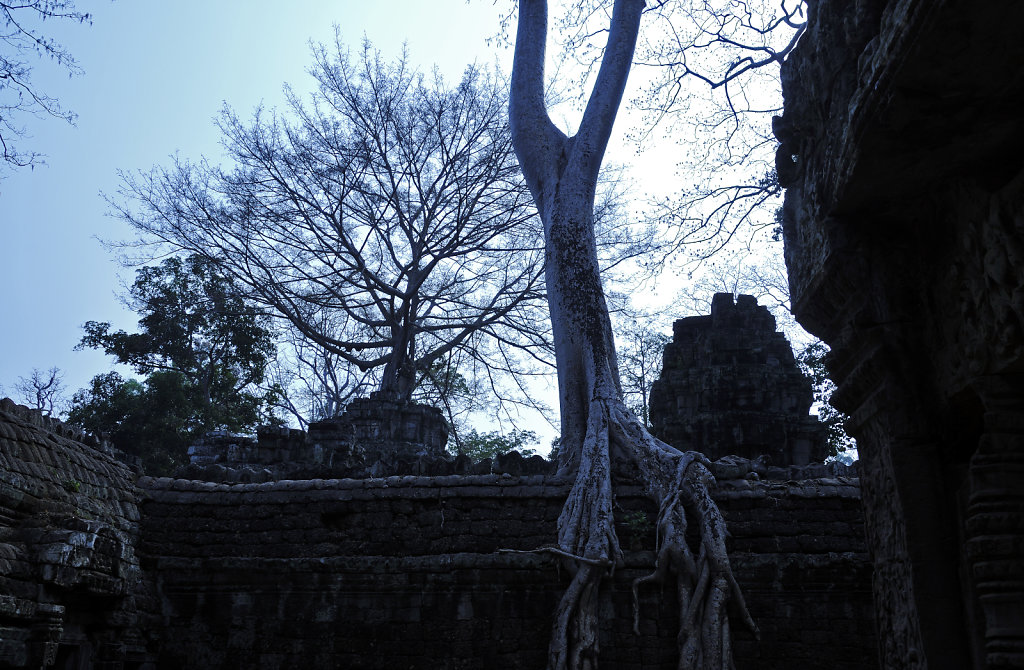kambodscha - tempel von anghor - ta prohm (28)