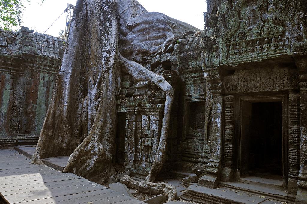 kambodscha - tempel von anghor - ta prohm (31)
