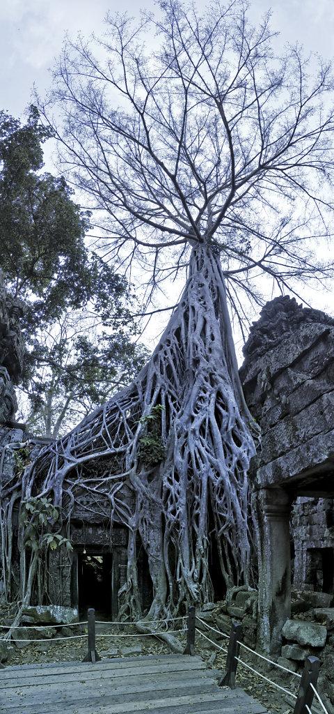 kambodscha - tempel von anghor - ta prohm (46) - teilpanorama te