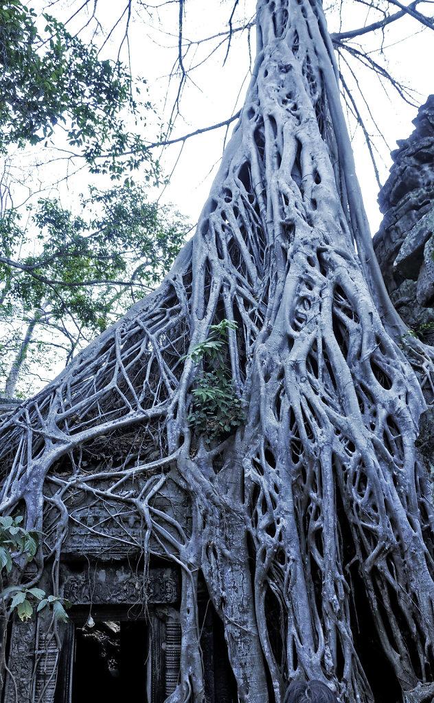 kambodscha - tempel von anghor - ta prohm (47)