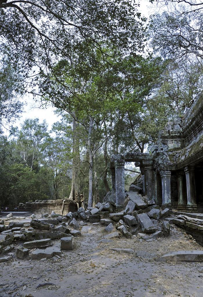 kambodscha - tempel von anghor - ta prohm (57) - teilpanorama te