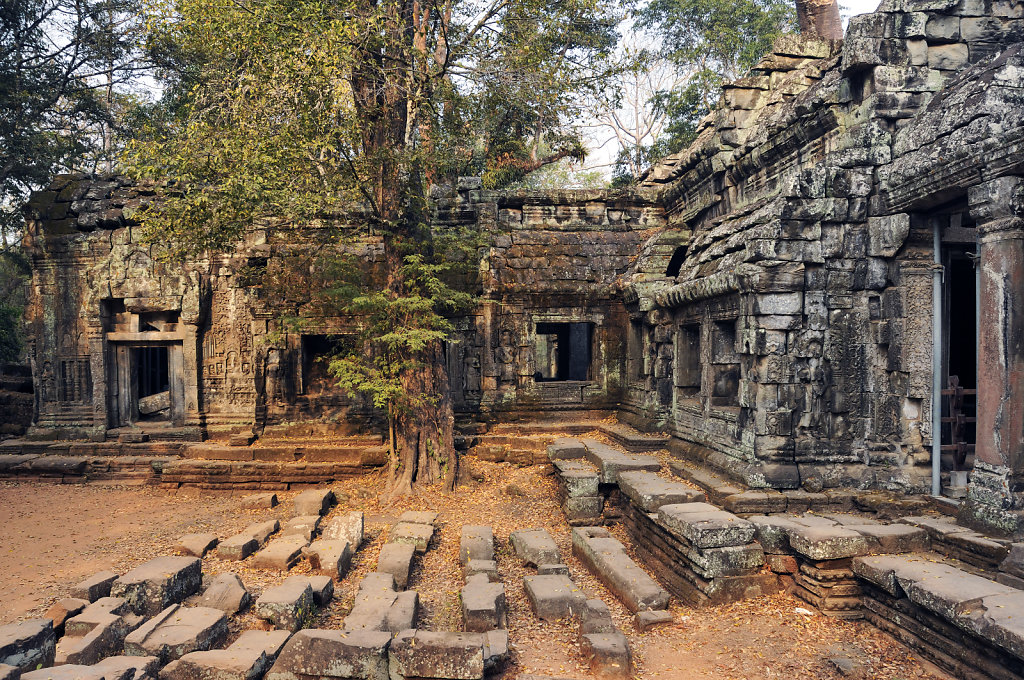 kambodscha - tempel von anghor - ta prohm (11)