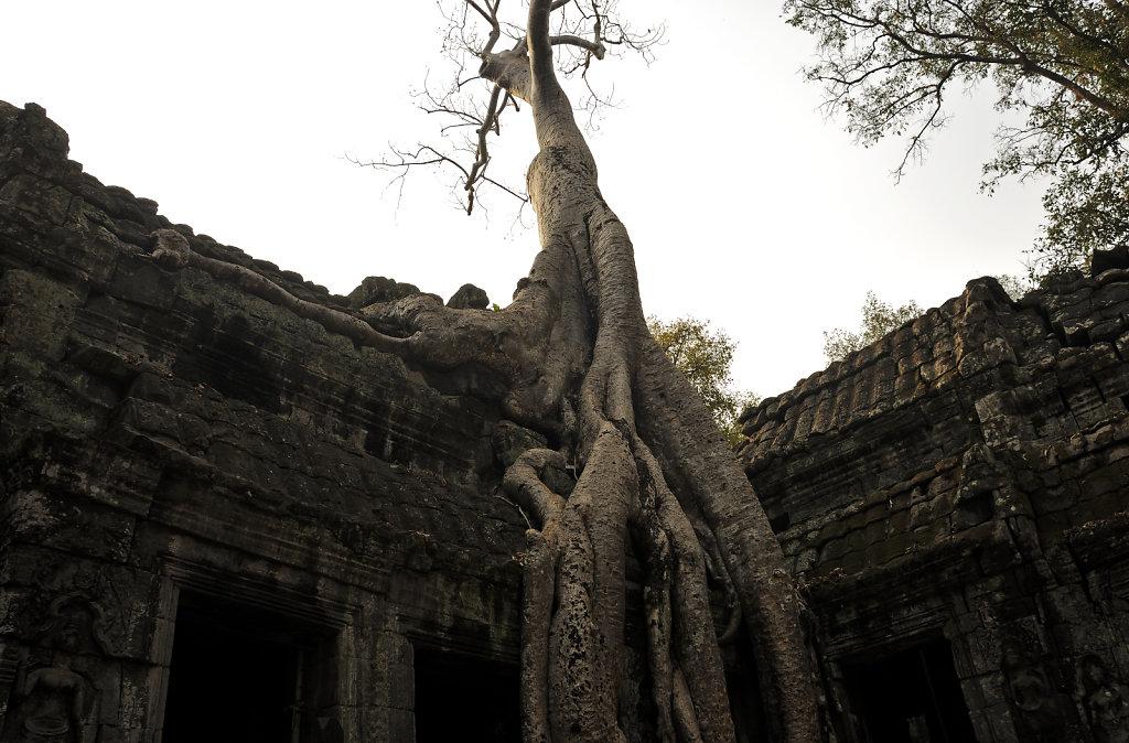 kambodscha - tempel von anghor - ta prohm (13)